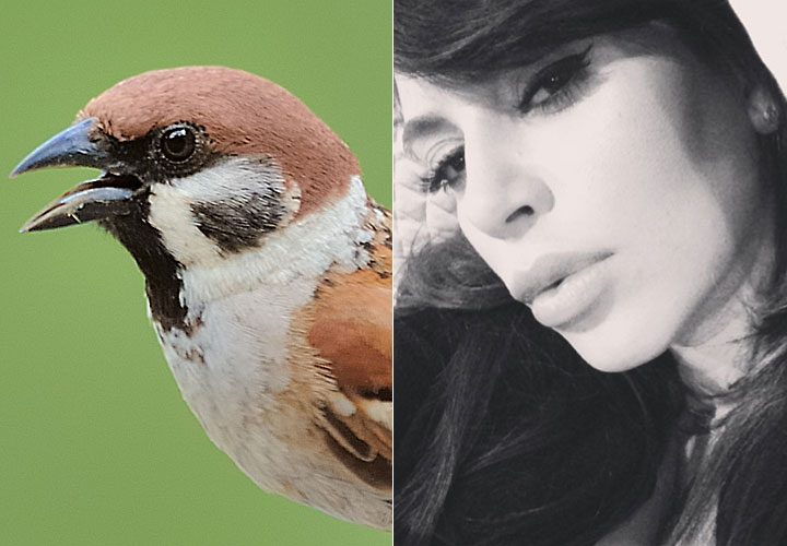 cos-02-sparrow-selfie-de
