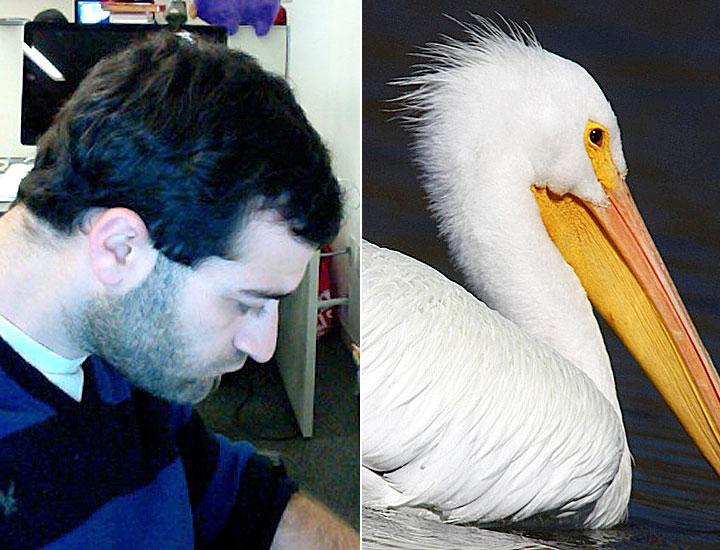 cos-03-pelican-selfie-de