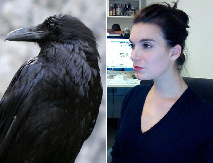 cos-05-crow-de