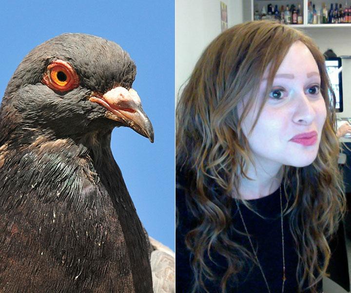 cos-10-pigeon-selfie-de