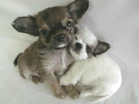 hug-friend-day-38-cute--large-msg-136699838749